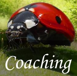 Schamanismus Coaching